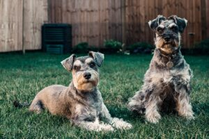 pies,mieszkanie,rasa psów